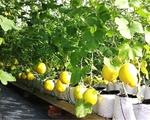 Khởi nghiệp từ nông nghiệp - Xu hướng đầy tiềm năng tại ĐBSCL