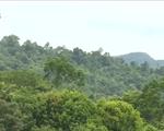 TT-Huế: Giảm phát thải khí nhà kính bằng việc hạn chế mất rừng