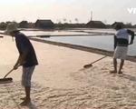 Nhiều địa phương kiến nghị thu mua tạm trữ muối