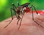 Tăng cường lấy mẫu tại phòng khám tư để phát hiện sớm nhiễm Zika