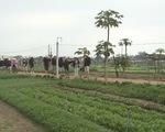 Ghé thăm Trà Quế - Ngôi làng ướp hương cho gió - ảnh 1