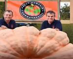 Kỷ lục trái bí ngô nặng nhất thế giới bị phá vỡ