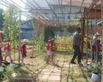 Trải nghiệm làm nông dân ở làng rau sạch Củ Chi