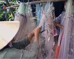 Nhộn nhịp mùa cá ra tại Đồng Tháp