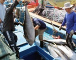 Xuất khẩu cá ngừ Việt Nam sang Mexico tăng mạnh