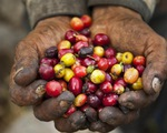 Colombia đặt mục tiêu tăng sản lượng cà phê