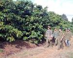 Nạn trộm cắp nông sản ở Tây Nguyên đã giảm