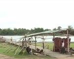 """Gia Lai: Người dân """"đánh cược"""" tính mạng trên những cây cầu tạm"""
