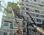TP.HCM: Mưa lớn, cây cổ thụ bật gốc đè lên nhà 3 tầng