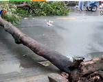 Tai nạn từ cây xanh ngã đổ ở TP.HCM: Thiếu hệ thống cảnh báo hiệu quả