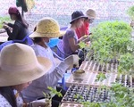 Lâm Đồng: 11 cơ sở sản xuất giống cây không đủ tiêu chuẩn