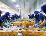Đề xuất thành lập trung tâm sản xuất cá tra giống chất lượng cao