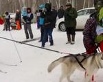 Thú vị cuộc thi trượt tuyết với chó kéo tại Nga