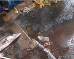 Người dân Phú Yên bức xúc trước nỗi ám ảnh ô nhiễm từ chợ cá