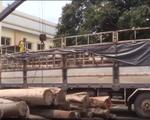 Làm rõ 7 đối tượng trong vụ vận chuyển gỗ lậu quy mô lớn tại Đăk Lăk - ảnh 1