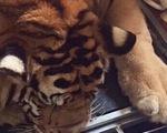 Liên tiếp bắt giữ nhiều đường dây buôn bán động vật quý hiếm