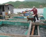 Phú Yên: Di dời bè nuôi cá trái phép ở vịnh Vũng Rô