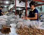 """Việt Nam chuẩn bị đón """"làn sóng"""" đầu tư từ châu Âu nhờ EVFTA"""