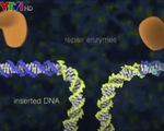 Sử dụng công nghệ biến đổi gen CRISPR để đổi màu hoa