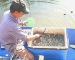 Xây dựng mô hình xử lý bệnh trên tôm nuôi bền vững