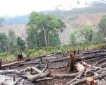 Rừng miền Trung, Tây Nguyễn vẫn đang chảy máu dù có lệnh đóng cửa rừng