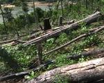 Quảng Nam lập đoàn kiểm tra vụ phá rừng đầu nguồn sông Tranh