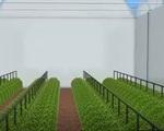 Biến bất lợi thành lợi thế, Jodan trồng rau trên sa mạc - ảnh 1