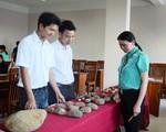 Gia Lai: Phát hiện công xưởng chế tác rìu đá có niên đại hơn 5.000 năm
