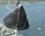 Tình trạng bỏ hoang ruộng muối ở Nam Trung Bộ