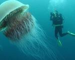 Chiêm ngưỡng loài sứa phát quang rực rỡ - ảnh 1