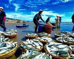 Nhiều biến động giá các mặt hàng thủy sản sau khi EU rút thẻ vàng