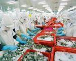 Đẩy mạnh xuất khẩu tôm sang các thị trường tiềm năng - ảnh 1