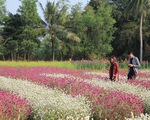 Vườn hoa Mãn Đình Hồng - Điểm đến dịp lễ 30/4 tại Tiền Giang