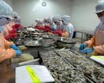 Chuỗi sản xuất tôm sạch đầu tiên xuất khẩu sang EU tại Kiên Giang