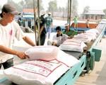 Bộ Công Thương hướng dẫn thực thi quy định 'cởi trói' cho xuất khẩu lúa gạo