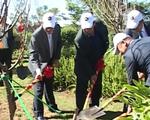 Trồng mới 125 cây hoa anh đào Nhật Bản tại Đà Lạt