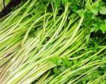 Thương lái các nước quan tâm đến rau cần Việt