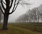 Sương mù bất thường xuất hiện ở Australia và Hà Lan