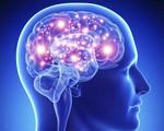 Đầu to có tỉ lệ thuận với trí thông minh không?
