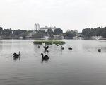 Một con thiên nga ở hồ Thiền Quang bị mắc lưỡi câu trộm - ảnh 1