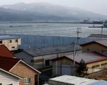 Nhật Bản: Sức sống trở lại Fukushima 7 năm sau thảm họa kép