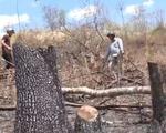 Rừng phòng hộ Buôn Đôn: Trơ trụi vì phá rồi đốt
