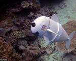 SoFi - Robot cá thám hiểm đại dương