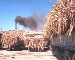 Trà Vinh: Hàng trăm ghe mía nằm chờ nhà máy