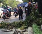 TP.HCM: Nhánh cây đổ đè vào người đi đường, 2 người bị thương