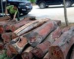 Vụ gỗ lậu ở Đắk Nông: Bắt khẩn cấp trùm Phượng 'râu' và đồng phạm