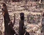 Bình Thuận xác minh đường dây bảo kê lấn chiếm đất rừng