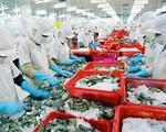 Doanh nghiệp xuất khẩu ký được hợp đồng, giá tôm tăng trở lại