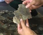 Ngụy trang dưới dạng hạt điều để vận chuyển 3 tấn vẩy tê tê