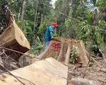 Quảng Nam: Kỷ luật các cán bộ kiểm lâm để xảy ra phá rừng